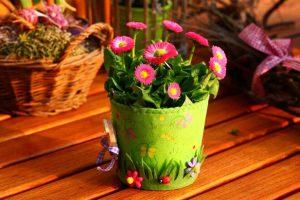 Домашние цветы в магазинах Квітковий Рай