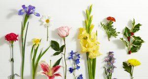Цветочный Блог
