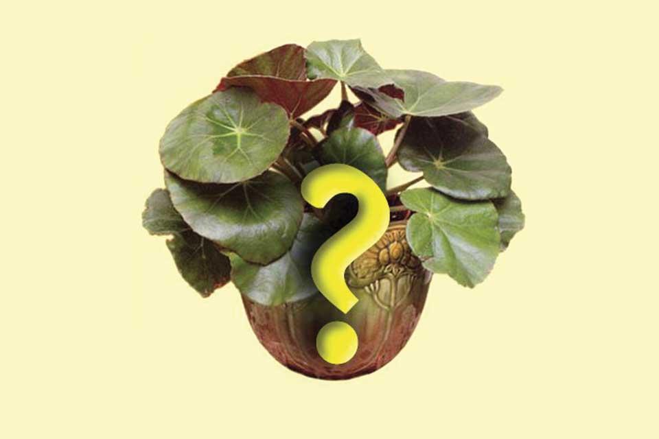 Почему комнатное растение не цветет