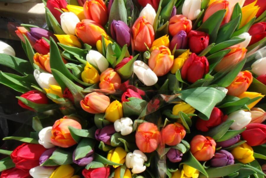 Море тюльпанов в Цветочном Раю