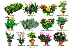 растения для человека