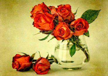 Советы по уходу за цветами от флористов