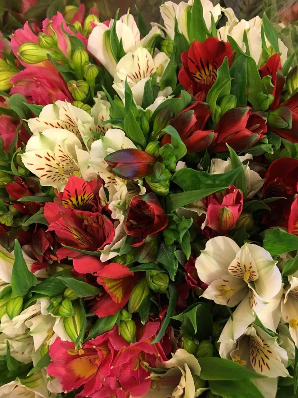 Цветы-8