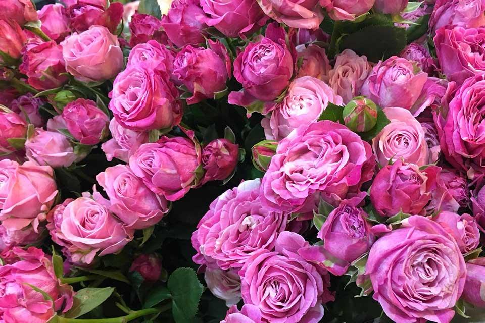 цветы на позняках
