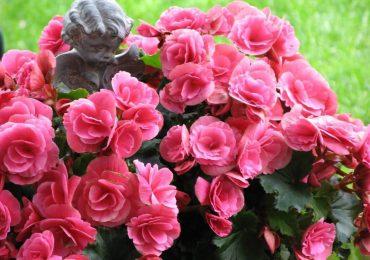 цветы в горшках