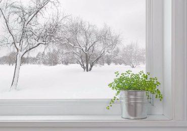 Советы по уходу за растениями в зимний период