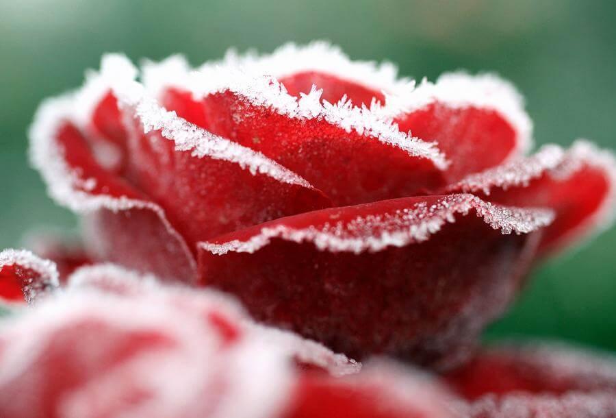 Зимние букеты