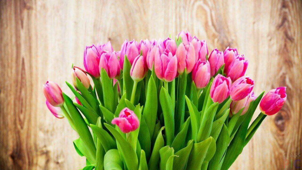 Купить тюльпаны позняки