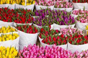 Дарите тюльпаны всем кому желаете састья