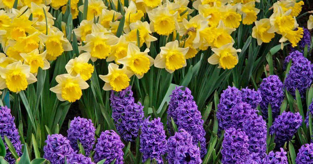 Весна, давай уже скорее приходи!