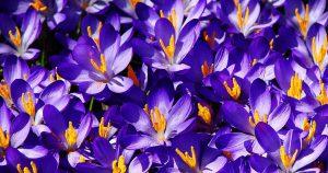 цветы-для-Водолея
