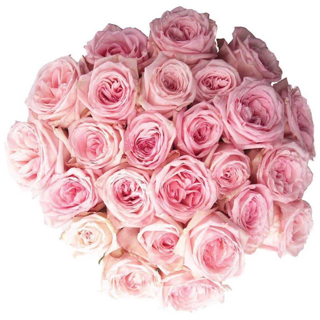 розовые-цветы-купить-позняки