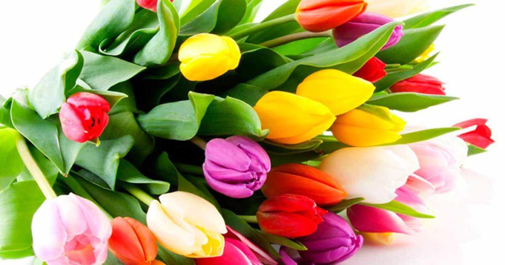 чНи дня без свежих цветов!!!