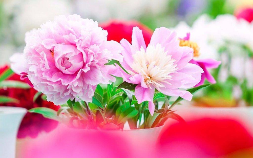Цветы на первомай