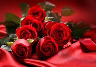 Какие цветы выбрать на День рождения?